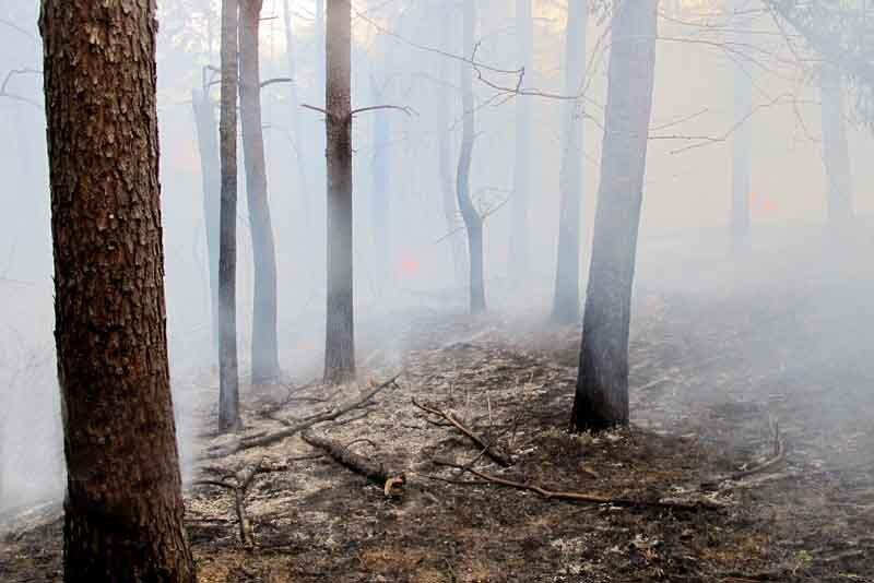 هشدار درباره احتمال آتش سوزی جنگل ها و آلاینده های جوی در سمنان