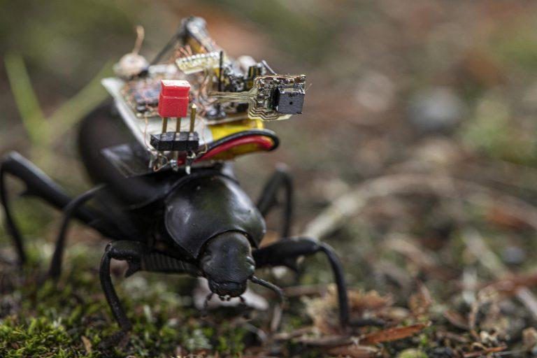محققان برای حشرات کوله پشتی طراحی کردند ، نگاه به مناظر از دید حیوانات با ریزترین دوربین