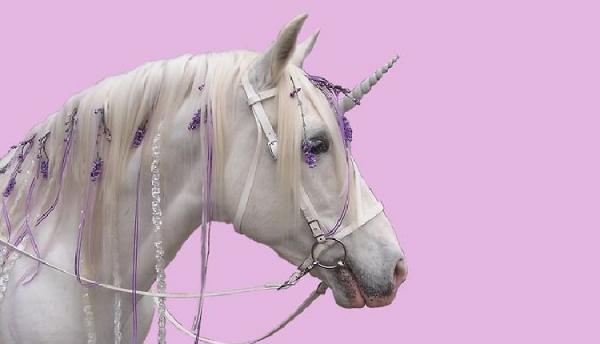 13 عکس اسب تک شاخ فانتزی و واقعی زیبا برای پروفایل