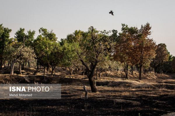بارزترین مصداق حقوق عامه در قزوین، باغستان است