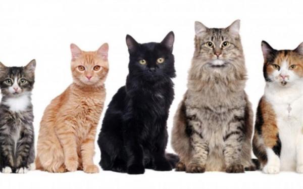 گربه های خانگی صاحبشان را خوردند